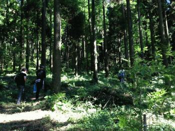 アジアの森②.jpg