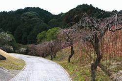 re.miyukibairin20190205-4.jpg