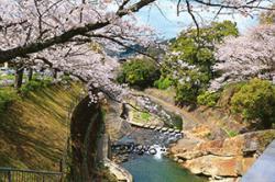 re.sakura2019ureshinogawa0331-1.jpg