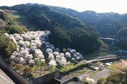 re.sakura2019yokotake0401-3.jpg