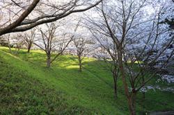 re.sakura2019yokotake0401-4.jpg