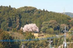 re.hyakunenzakura20200310-1.jpg