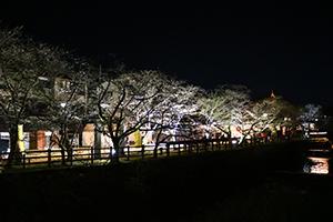 http://www.u-genki.jp/re.sakagurayozakura2019.jpg