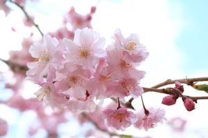 http://www.u-genki.jp/re.takanosu20200310-3.jpg